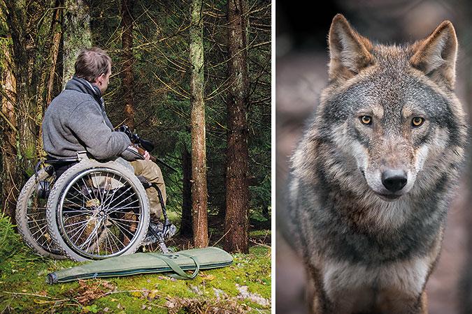 Kollage av två bilder. Den ena föreställer en jägare i rullstol på pass i skogen och den andra är en bild av en varg.
