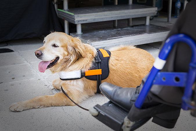 En hund ligger framför en person i rullstol av vilken man bara ser ena foten. Hunden har en slags väst på sig och är kopplad.